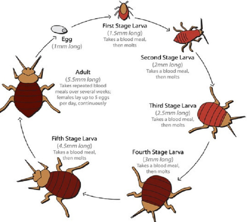 bug infographic visual facts bed community interesting ly bugs