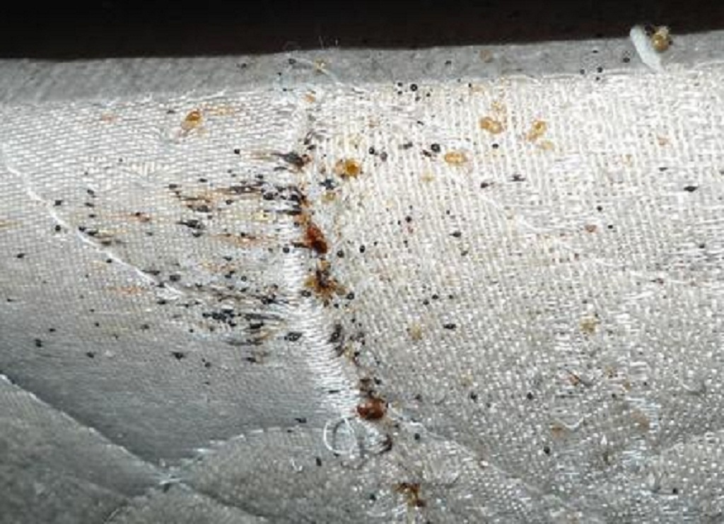 Bed Bugs Pictures Bed bugs Photos in Mattress – BED BUG ...